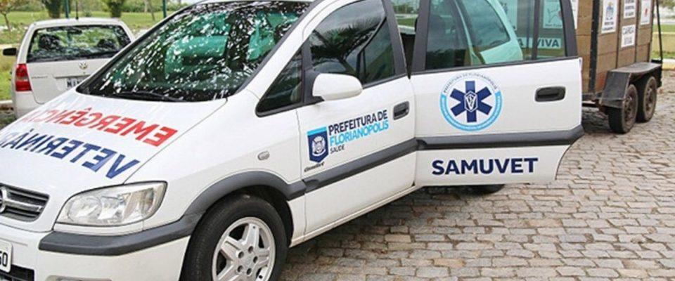 """Em Florianópolis foi criado um """"Samu"""" para socorrer animais acidentados"""