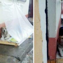 Família monta uma barraca para poder proteger cães de rua da chuva