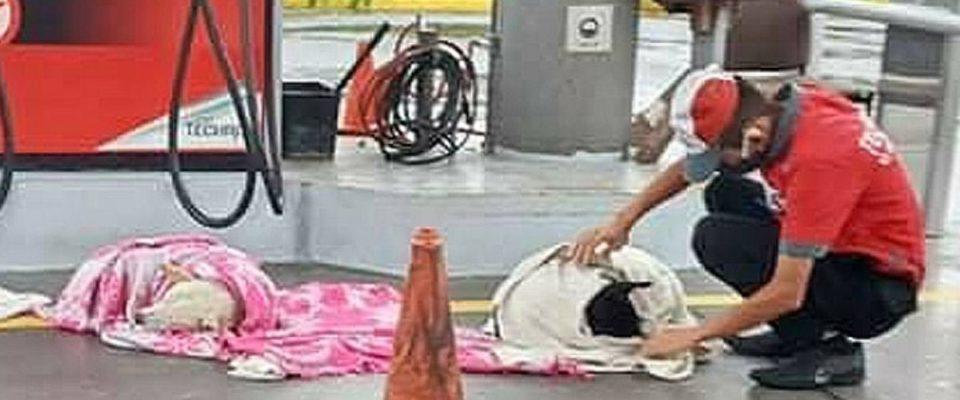 Funcionários de um posto de gasolina abrigam cães de rua, eles até colocam cobertores