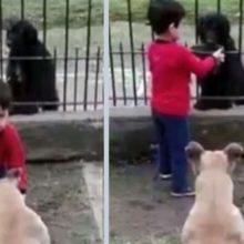 Garotinho faz uma coisa emocionante com um cãozinho de rua