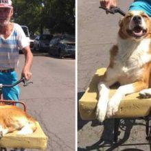 Homem faz caminha adaptada para seu cão, ele ama passear na bicicleta com o dono