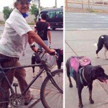 Idoso leva comida para cães de rua todos os dias e muda suas vidas