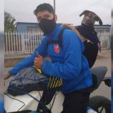 Jovem adota cachorro abandonado enquanto fazia delivery e agora a leva a todos os lugares