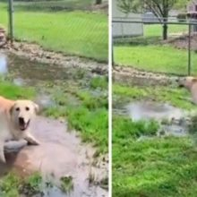 Momento em que um cão cego descobre uma poça de água pela primeira vez