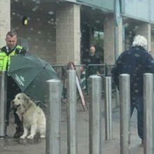 Segurança protege o seu cachorro com o guarda-chuva durante um temporal
