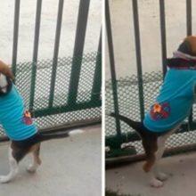Um cãozinho chama seu amigo para entrar na sua casa e brincar