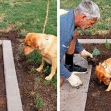 Um jardineiro não precisa de uma pá no seu jardim, ele tem o melhor ajudante