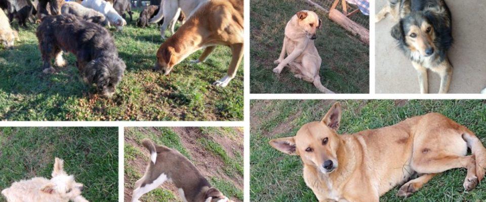 Uma ação solidária arrecada ração para mais de 120 cães abandonados