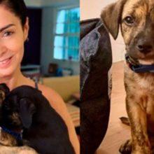 Atriz Claudia Ohana devolve cães adotados de abrigo depois de eles crescerem