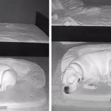 Câmera flagra momento adorável garotinho sai da sua cama para dormir com seu cão