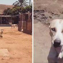 Cão cego de um abrigo sempre corre quando ouve a voz do seu melhor amigo