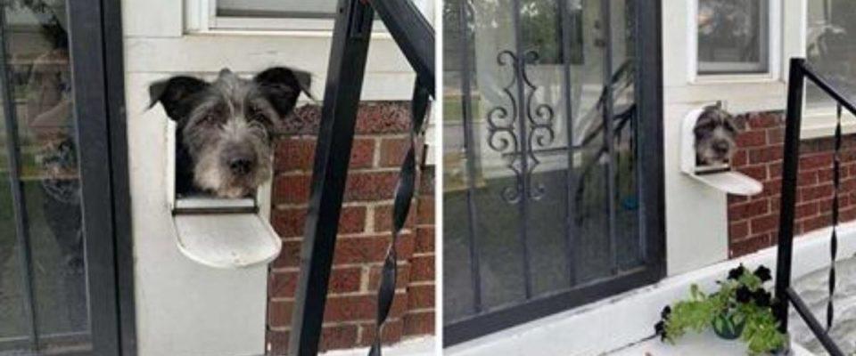 Cão percebe que a caixa de correio é uma maneira perfeita para dar oi para as pessoas do bairro