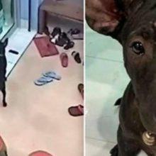 Cão perdido lembra o caminho para a clínica veterinária e late na porta para pedir ajuda