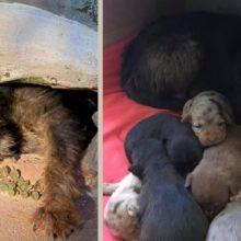 Corpo de bombeiros resgatam cachorro com 6 filhotes em prédio abandonado