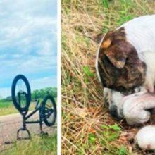 Garotinhos de 13 anos salvam cachorro de rua que não podia mais se mover