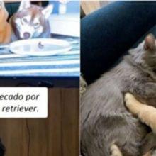Gatinha viciada em ver vídeos de cães ganha um filhote de cachorro de estimação