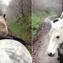 Gatinho e cavalo se tornam melhores amigos e adoram partir juntos para aventuras