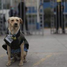 Hachiko peruano : cão espera seu dono há três dias fora do hospital Almenara