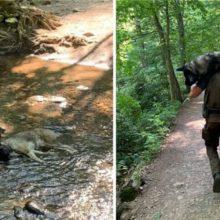 Homem resgata cachorro desidratado nos ombros e salva a sua vida