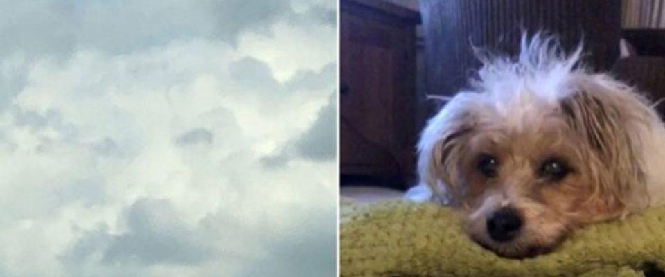 Mulher de coração partido vê o rosto de seu cachorro no céu horas após sua morte