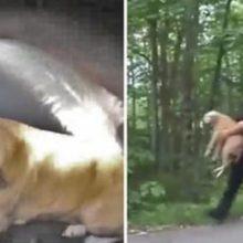 Polícia resgatou um cão preso em um casa em chamas. Seus donos estavam sem esperança já