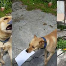 Quatro anos de amizade – cão ajuda carteiro a entregar cartas para o seu dono