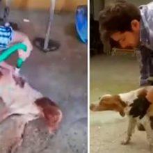 Seu cão era tetraplégico, eles pedem que ele a sacrifique, mas ele tinha outros planos
