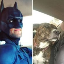 Tem um Batman da vida real que está salvando animais e ajudando a encontrar lares adotivos para eles