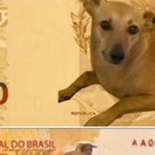 Um deputado faz abaixo-assinado para cão vira-lata caramelo virar nota de R$ 200
