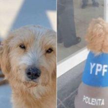 Um homem dono de um posto adota e contrata dois cães encontrados na estrada