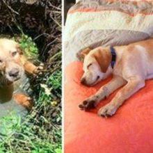 Um policial salva um cão de afogamento e resolve adotar ele