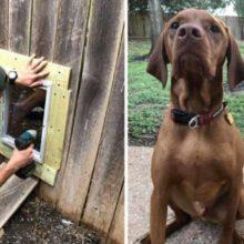 Vizinhos constroem porta na cerca para seus cães poderem brincar um com o outro