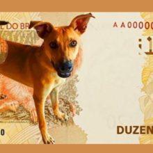 Banco Central do Brasil estuda elaborar moeda especial com o cãozinho vira-lata caramelo