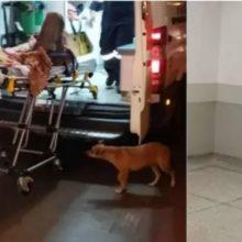 Cachorrinho fiel acompanha o seu dono inconsciente até hospital no PR; vídeo