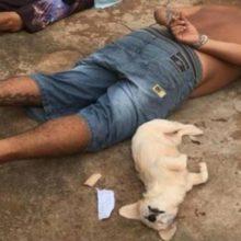 """Cachorrinho """"se entrega"""" à polícia durante prisão do dono por tráfico"""