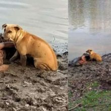 Cães se mostram fiéis e não abandonam idosa caída na lama na beira de um rio