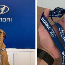 Cão adotado por concessionária Hyundai vira celebridade e ilustrará campanha nacional