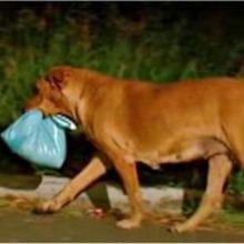 Cão de rua que foi adotado saía todas as noites, sua nova dona o seguiu para ver porque