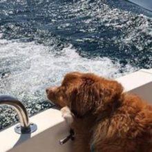 Cão é encontrado nadando sozinho no lago é resgatado e devolvido a seus donos