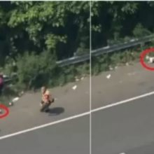 Cão fujão escapa da supervisão dos bombeiros em estrada e dá ínicio a uma grande fuga; veja
