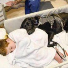 Cão mostra lealdade a menino autista e não sai de perto dele nem no hospital