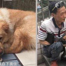 Cão passa 12 horas na estação de trem todos os dias por um motivo muito especial
