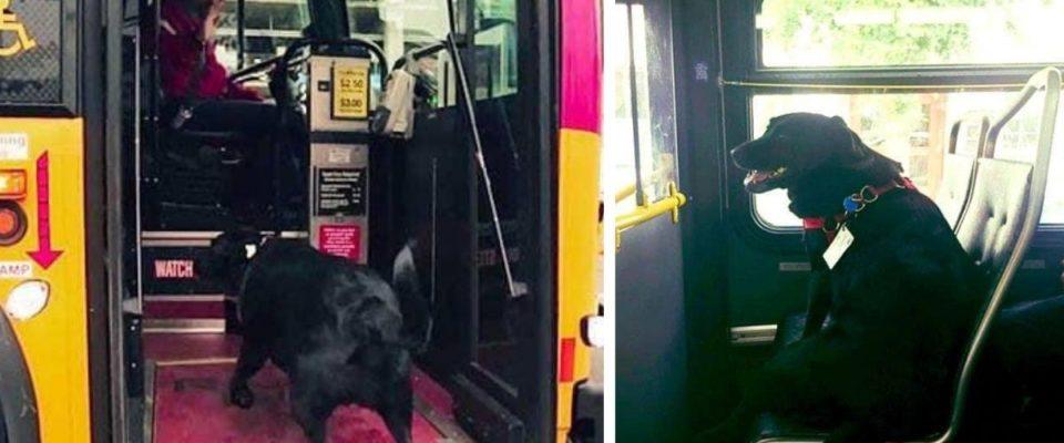 Cão pega ônibus sozinho todo os dias para brincar no parque e depois pega o ônibus para casa novamente