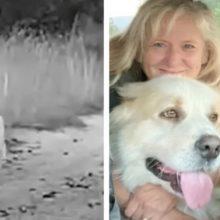 Cão perdido corre em direção à família como uma cena de um filme
