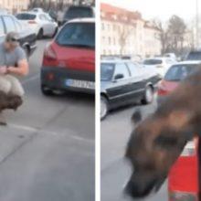 Cão pula do carro quando vê seu pai humano soldado que estava fora a 1 ano