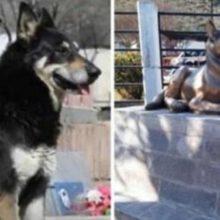 Cão que protegeu o túmulo do seu dono falecido por 10 anos e ganha estátua