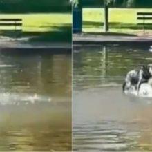 Cão se diverte em fonte de água, enquanto dono só lamenta em buscar ele; vídeo