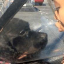 Cãozinho cego fez uma cirurgia ocular e vê o seu dono pela primeira vez