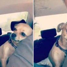 Cãozinho mostra todo seu carinho por seu humano e faz sucesso na internet