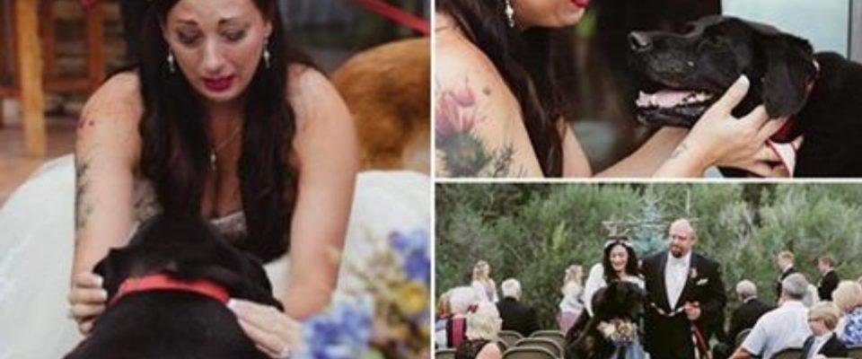 Comovente história do cão que mesmo à beira da morte, levou sua tutora até o altar para ela se casar